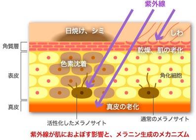 乳首や乳輪の色や黒ずみ解消はメラニン色素の働きから